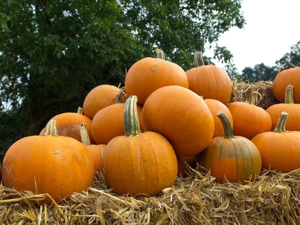 seniors pumpkin patch